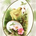 Free vintage clip art Easter chick on egg postcard image