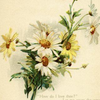 Free vintage clip art love poem daisies