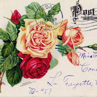 Free vintage clip art rose postcard Archias seed store