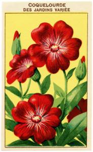 free vintage clip art French seed label coquelourde des jardins variee