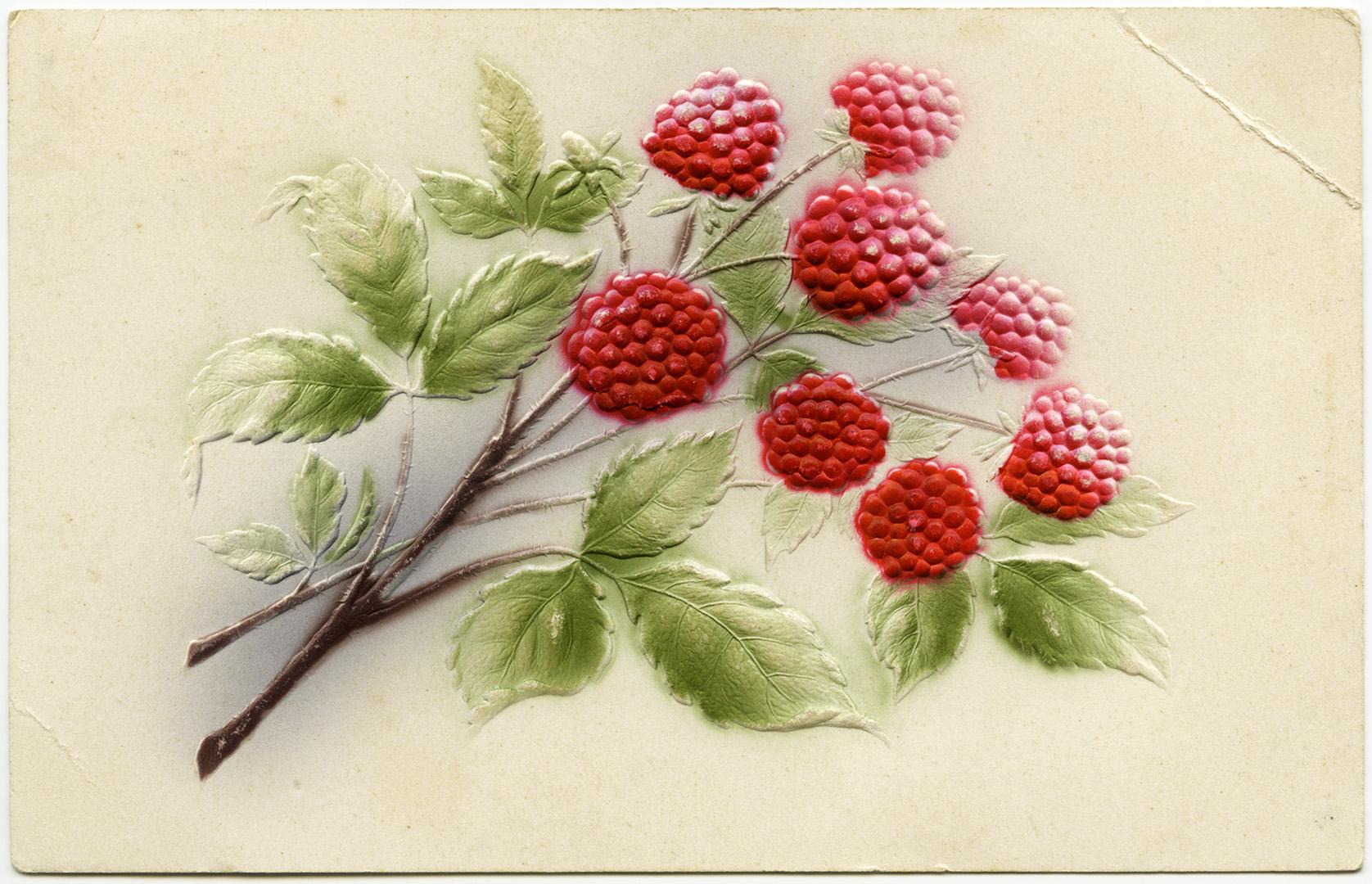 нас картинки с ягодами декупаж данном разделе