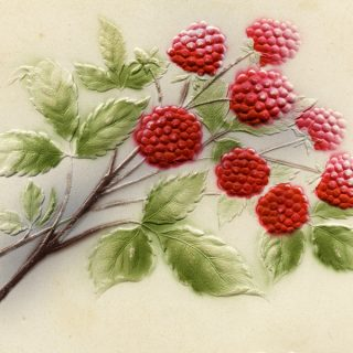 Free vintage clip art fruit red raspberries postcard
