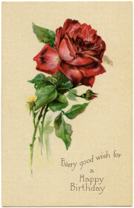 free vintage clip art birthday postcard red rose