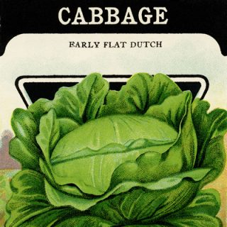 free vintage clip art cabbage garden seed packet card seed co