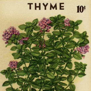 Free vintage clip art garden seed packet thyme roudabush store