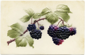 Free vintage clip art purple fruit black berries postcard