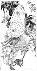 Free vintage butterfly fairy clip art illustration