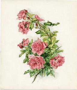 vintage clip art rose, pink roses illustration, antique flowers digital image, old roses clipart, printable graphics roses