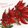 Free vintage clip art poinsettia postcard birthday greetings