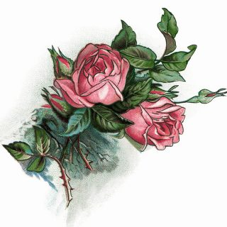 Pink Roses and Poem Vintage Clip Art