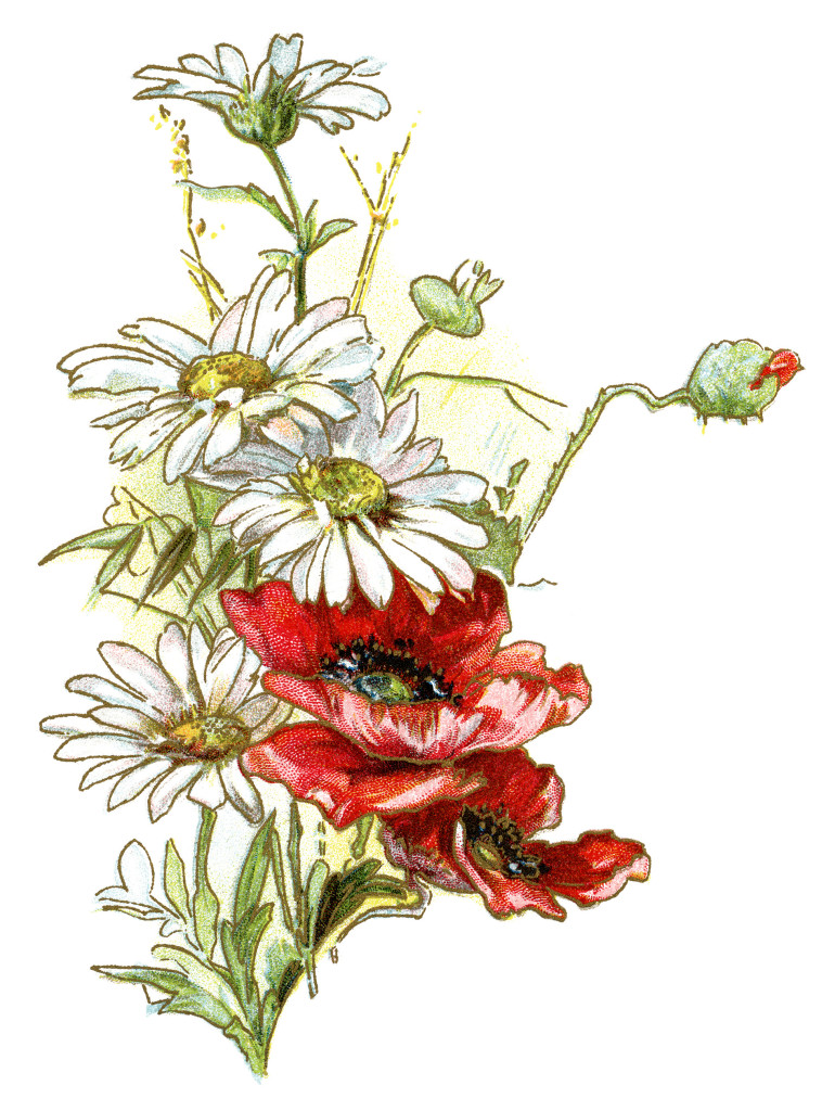 Free Vintage Image Daisies And Poppies Old Design Shop