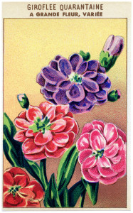 vintage French seed packet, vintage garden clipart, old fashioned seeds label, antique flowers clip art, free vintage ephemera graphics
