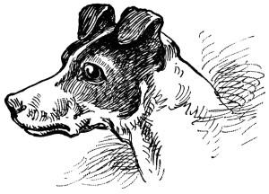 Free vintage dog clip art illustration