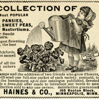free vintage clip art magazine garden ad victorian girl watering flowers