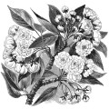 Chinese Cherry flowering branch, vintage flower clipart, black and white botanical clip art, branch with flower image, antique floral illustration