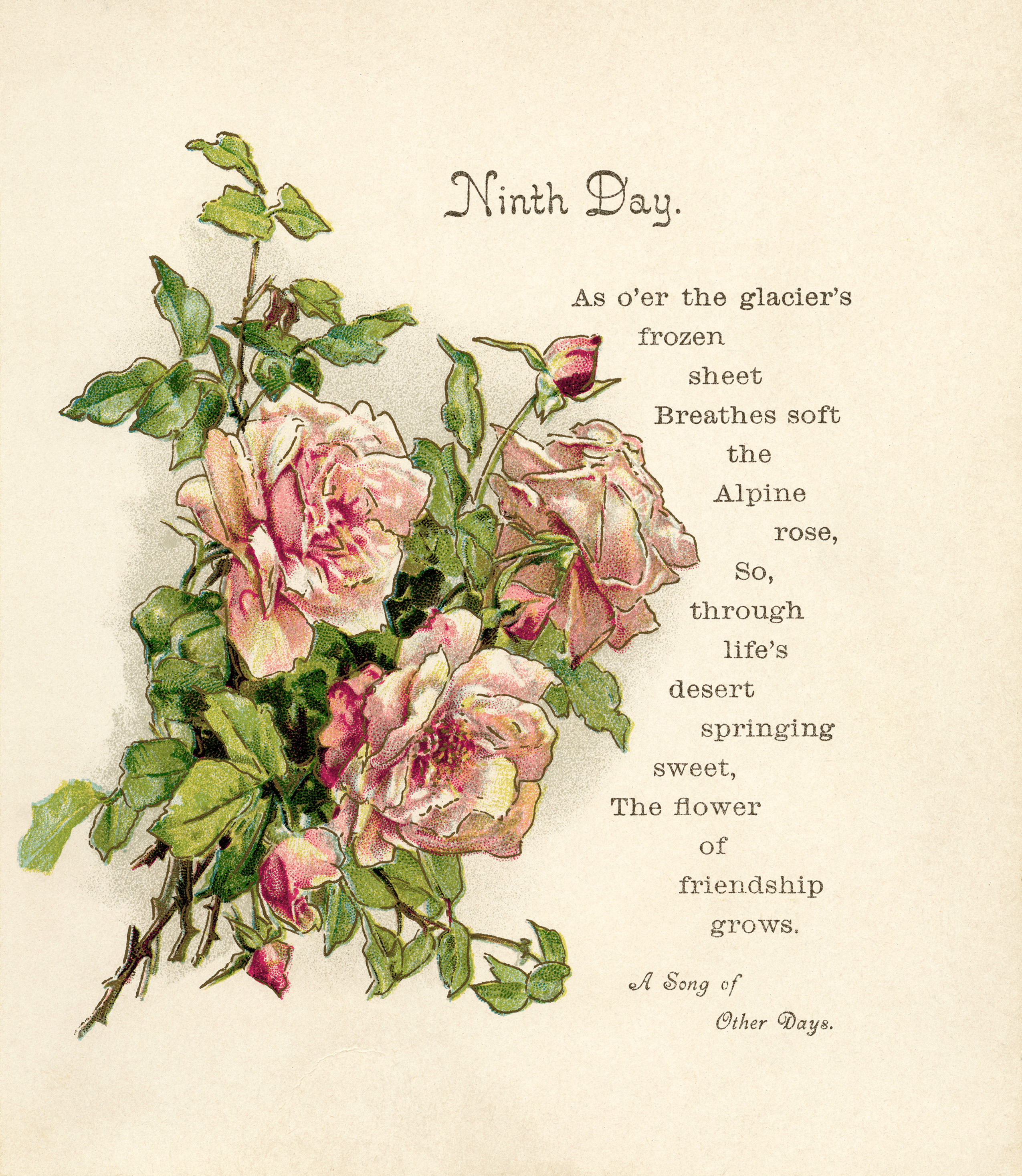 vintage roses clip art, old book page, ninth day poem, gems from holmes, pink roses image