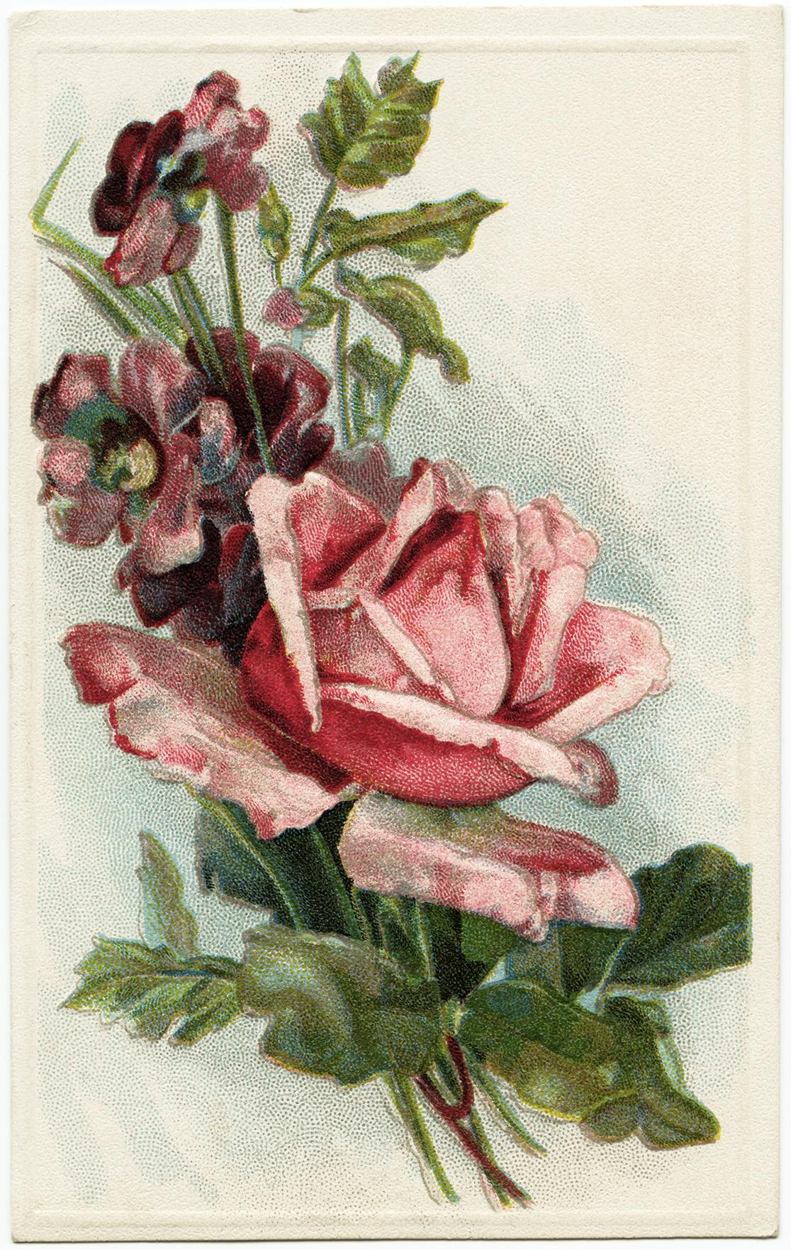 vintage rose image, old floral postcard, antique flower graphic, pink rose illustration, free vintage printable rose