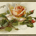 Free Vintage Image ~ Shabby Yellow Rose Greetings Postcard