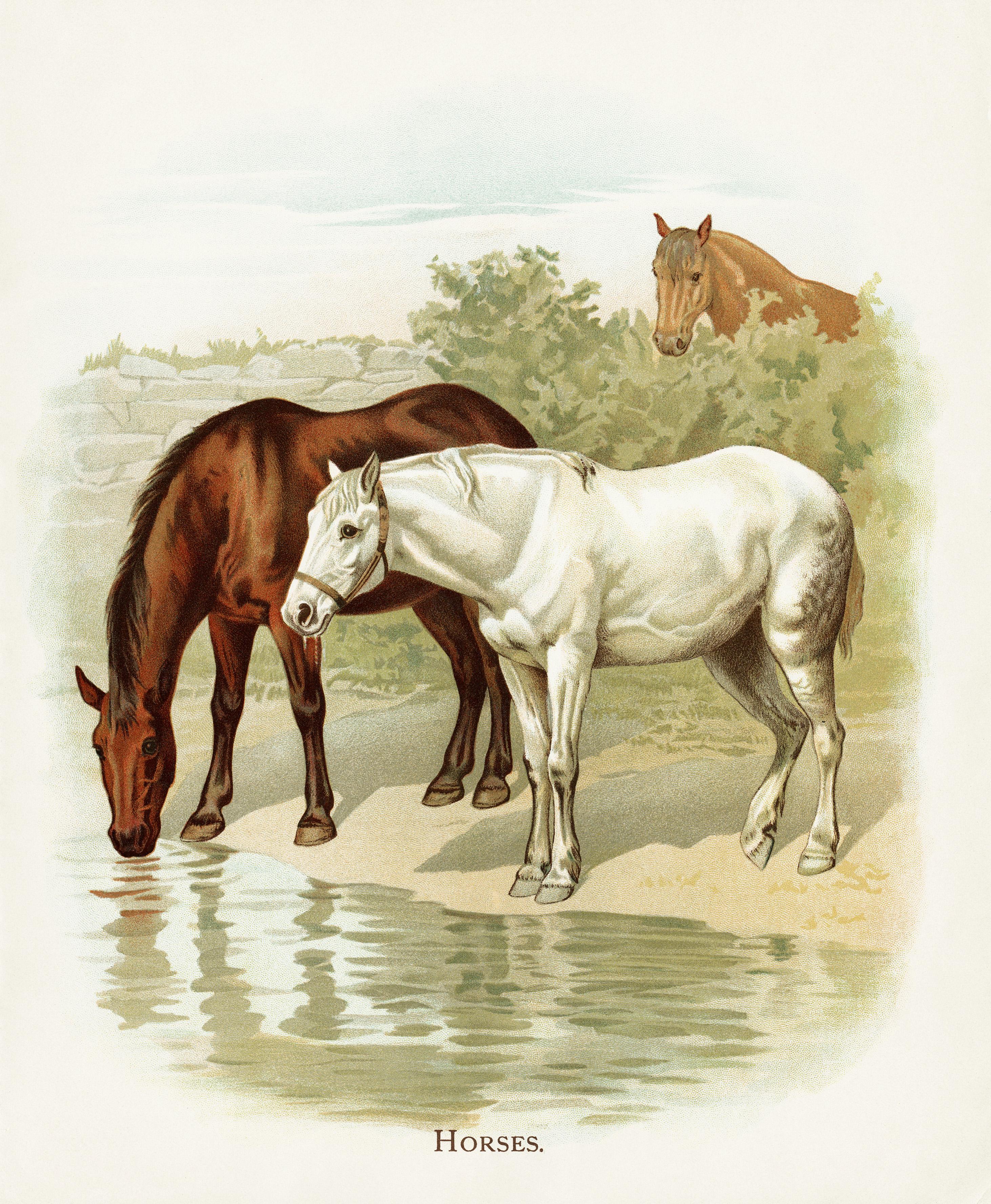 Free vintage image horses at the farm old design shop blog for Horse farm