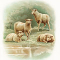 farm sheep image, vintage sheep art, visit to the farm, animals sheep lamb illustration