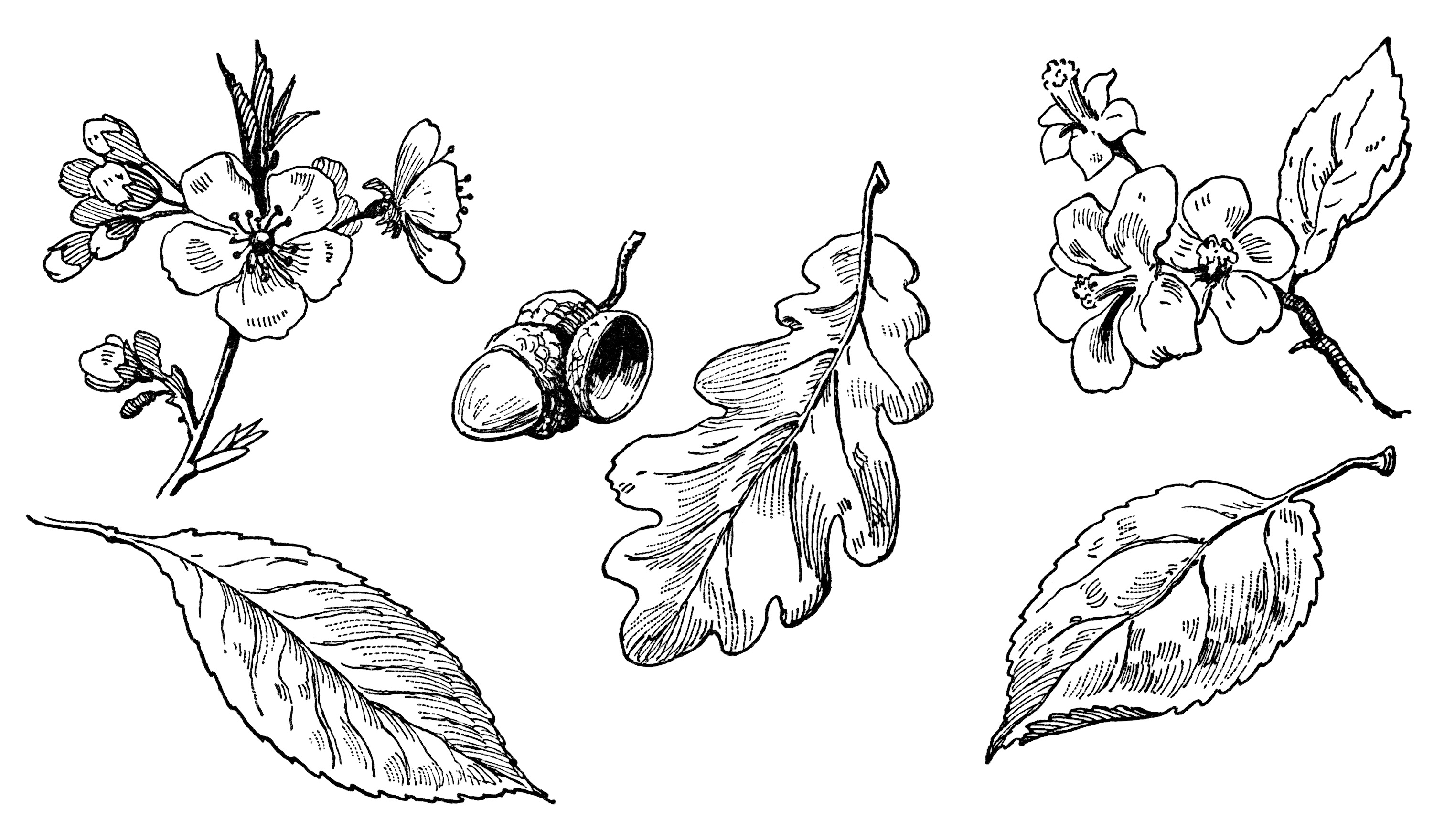 Pictures Of Leaf Illustration Black And White Kidskunstinfo