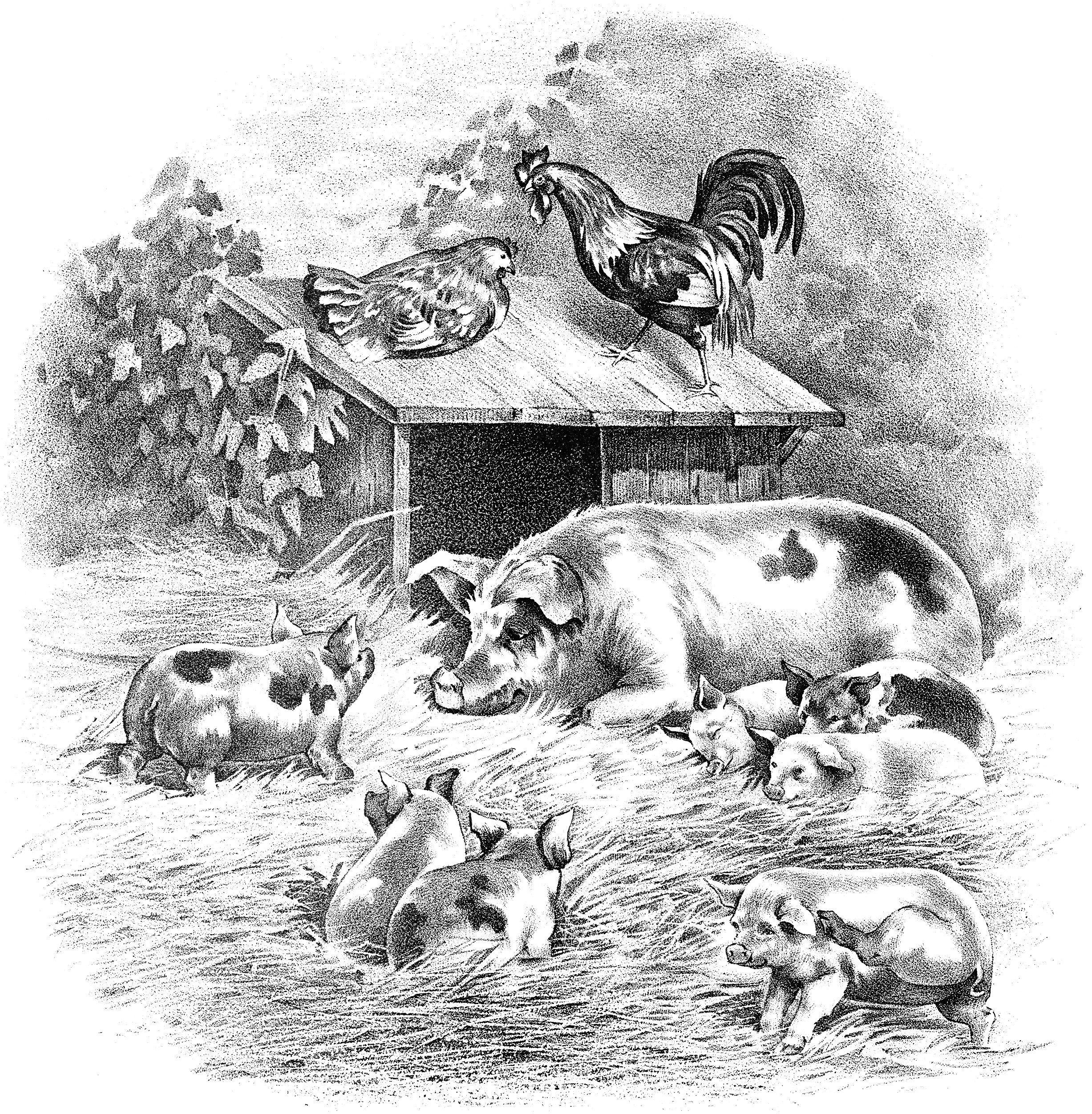 vintage farm animals image, pig piglet rooster hen illustration, black and white clip art, old fashioned farm graphic, farmyard scene illustration