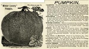 vintage pumpkin clip art, black and white clipart, winter pumpkin image, henderson pumpkin varieites, garden catalogue clip, printable garden graphics