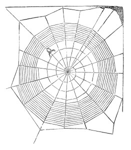 spiderweb clipart, vintage Halloween image, black and white clip art, spider on web illustration