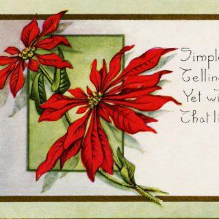 Free Vintage Clip Art Pointsettia Postcard