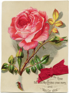 Free vintage clip art Christmas card pink rose red ribbon