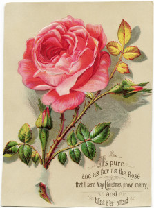 Free vintage clip art Christmas card pink rose