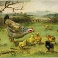 vintage easter postcard, old fashioned easter card, hen feeding chicks, printable chicken clipart, public domain digital image