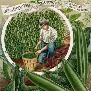 free vintage garden peas printable