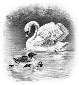 vintage animal clipart, swan duck duckling image, black and white clip art, farm animal illustration, old fashioned bird art, vintage bird printable
