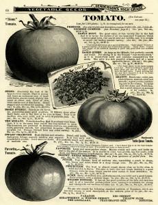black and white clipart, vintage garden printable, tomato clip art, vegetable garden, tomato illustration