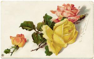 stecher postcard, catherine klein roses, antique birthday postcard, vintage birthday graphic, vintage flower clipart, old roses image