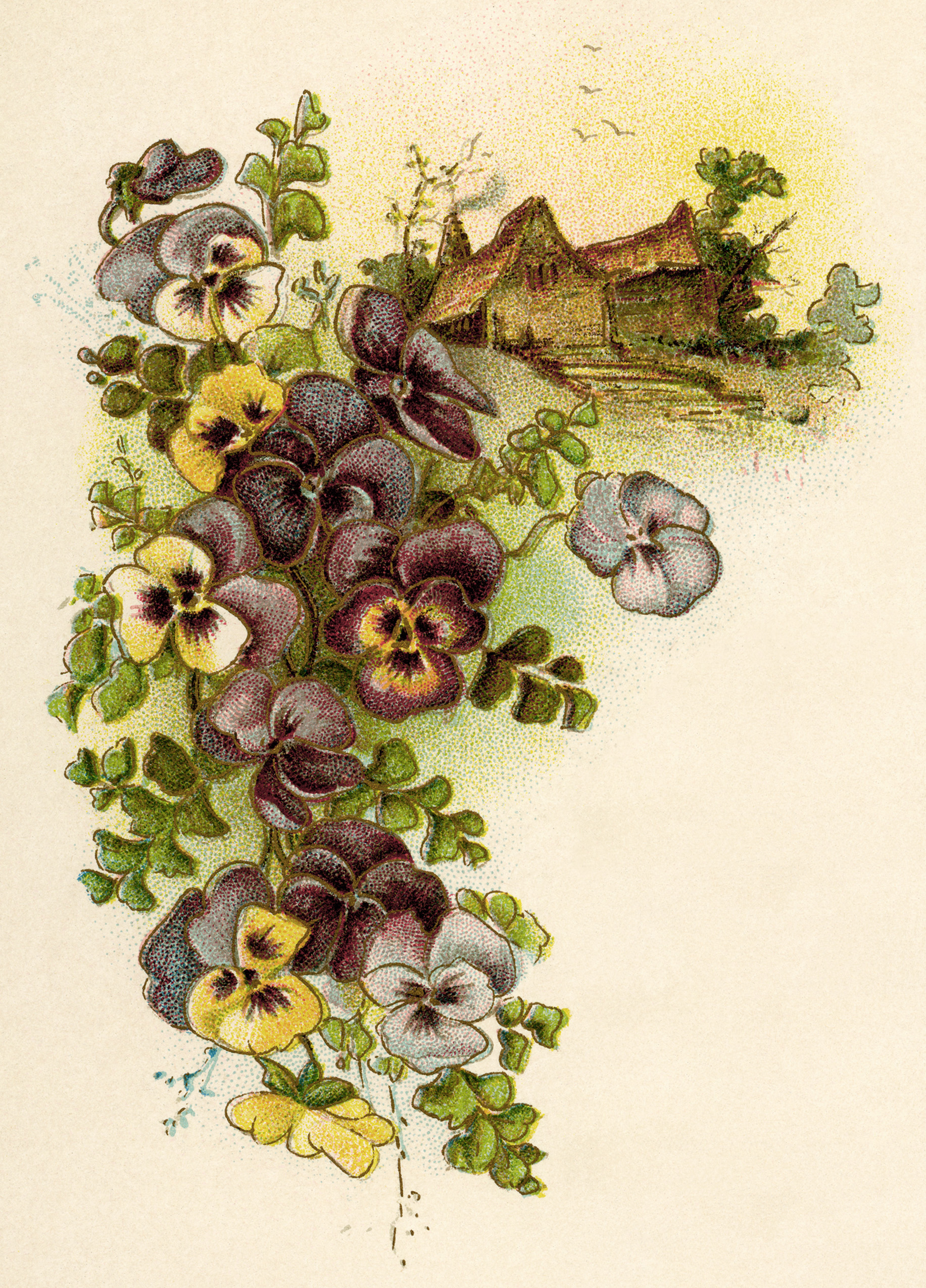 vintage pansy, free vintage image, pansies cottage illustration, vintage flower clipart, pansies clipart