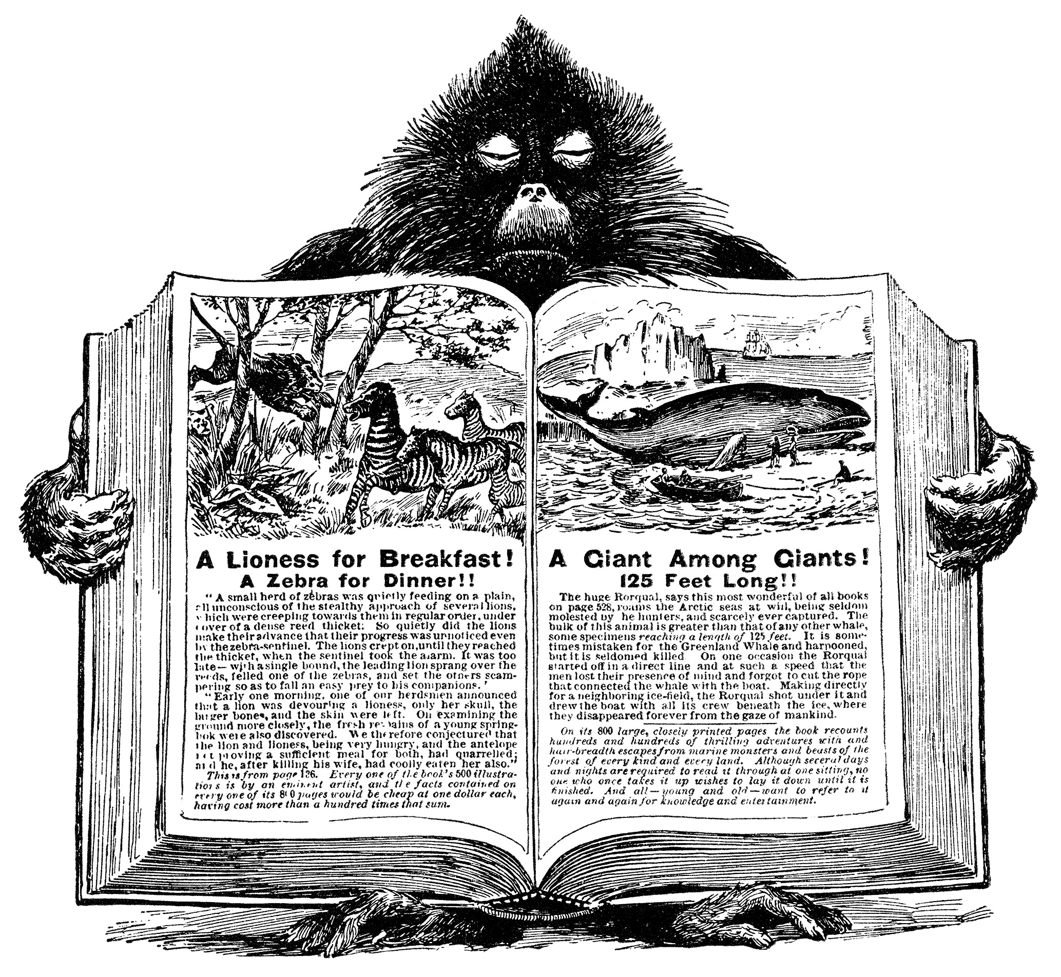 baboon holding book, unique vintage clipart, black and white graphics, open book blank pages