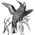 fish scale embroidery design, bird on branch, vintage bird clip art, black and white clipart, Victorian embroidery pattern