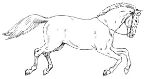 prancing horse free vintage clip art illustration