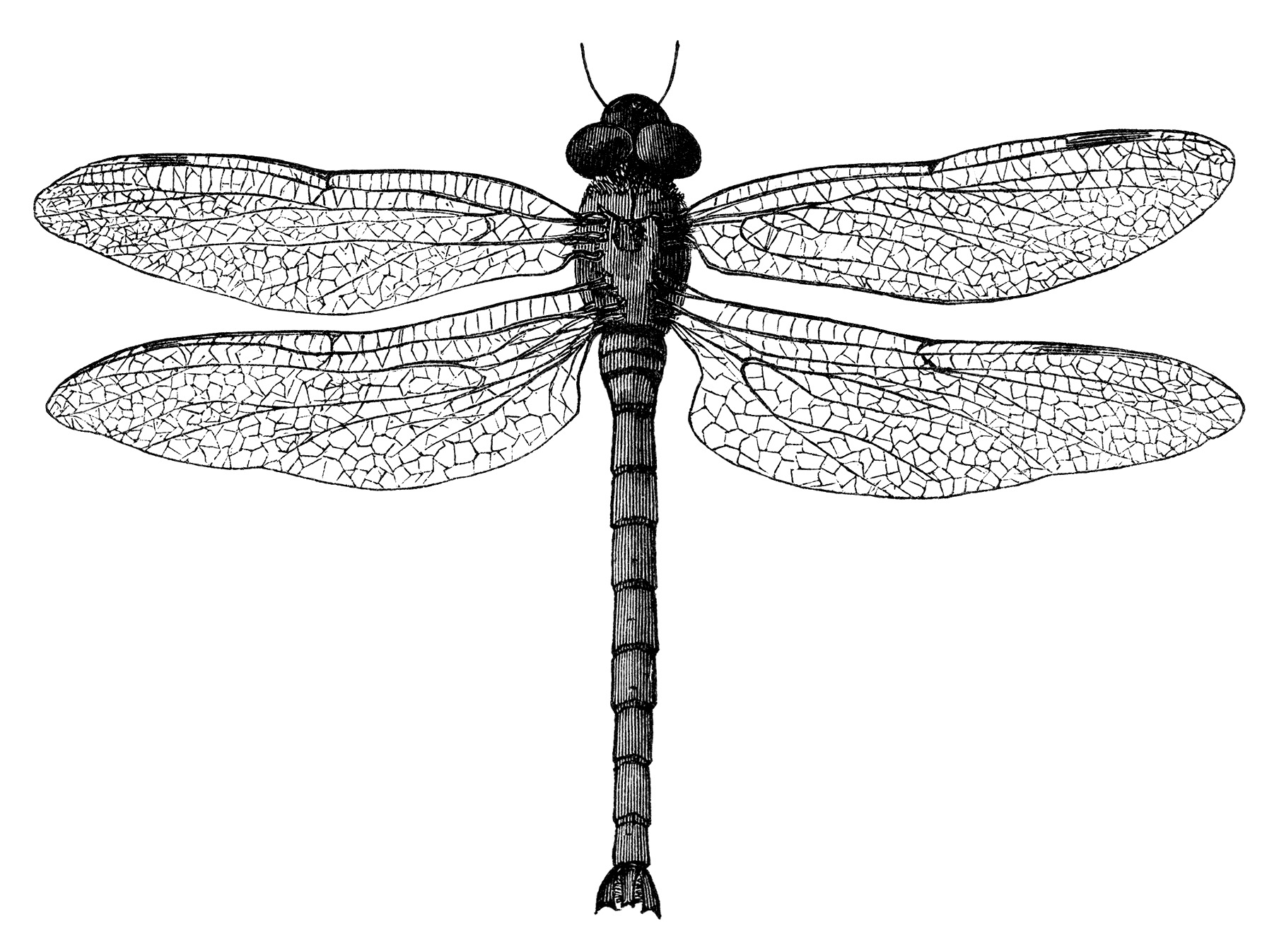 black and white clip art, vintage dragonfly clipart, digital stamp dragonfly, old dragonfly illustration, insect graphics