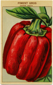 French seed packet, red pepper seed label, vintage garden graphics, bell pepper clip art, old fashioned seed package