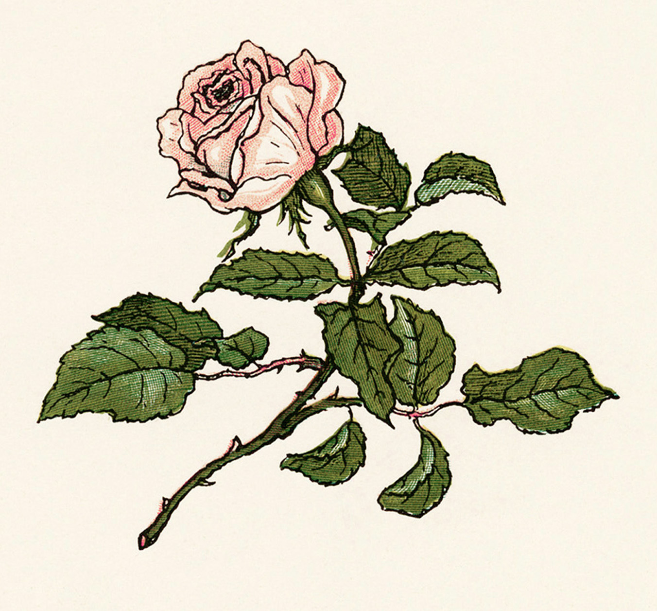 pink rose clipart, Kate Greenaway, vintage rose illustration, printable flower image, public domain floral graphics