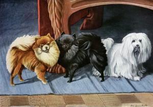 Louis Agassiz Fuertes, pomeranian vintage image free, maltese terrier illustration, vintage dog printable, small dog book plate