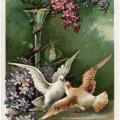 digital download image, free vintage ephemera, old fashioned postcard download, purple flowers doves clipart, vintage postcard birds, antique birthday postcard