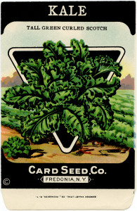 card seed co, vintage garden clip art, old fashioned seed package, vintage seed packet, kale garden seed pack graphics
