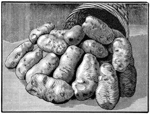 black and white clipart, vintage garden clipart, potato illustration, old magazine ad, basket of potatoes