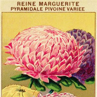 free vintage clip art French garden seed packet reine marguerite