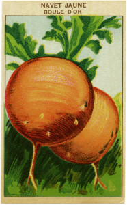 French seed label, old fashioned seed package, turnip seed pack, vintage garden clip art, vintage turnip illustration