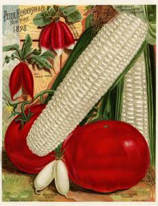 vintage garden illustration, vegetable garden printable, corn tomato radish image, Henderson's garden catalog, vintage food graphics